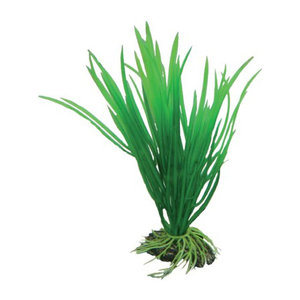 Plast växt- Cyperus 16cm