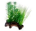 Flora rot 2. 17cm