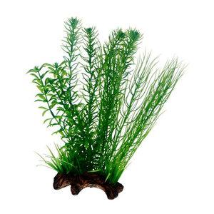 Flora rot 2. 30cm